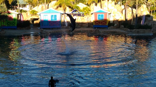 SEA WORLD 5